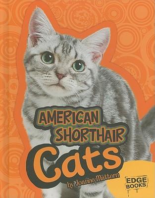 American Shorthair Cats By Mattern, Joanne